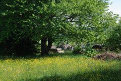 Blumenwiese und Kirschbaum