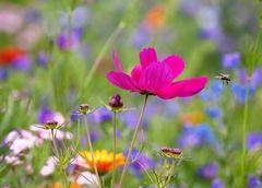 Blumenzauber 2