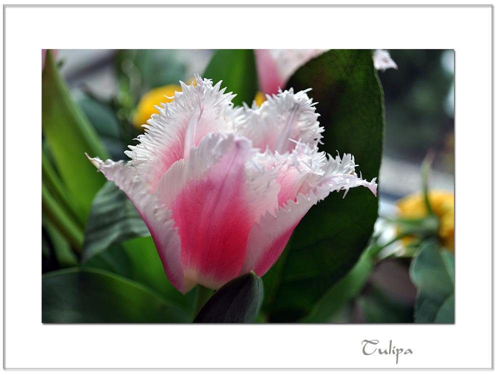 Blumige Grüße (2)
