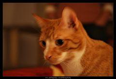 Blurry Cat.