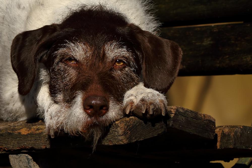 Boah Montage und Hundewetter...