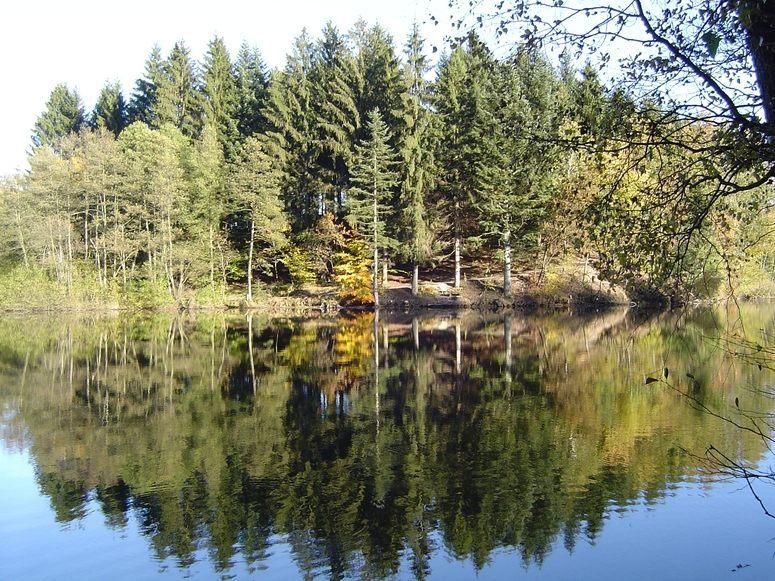 Boarischer Wald