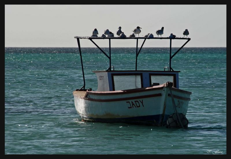 BOAT WITH BIRDS