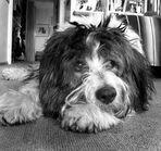 Bobberli ist im Hundehimmel......