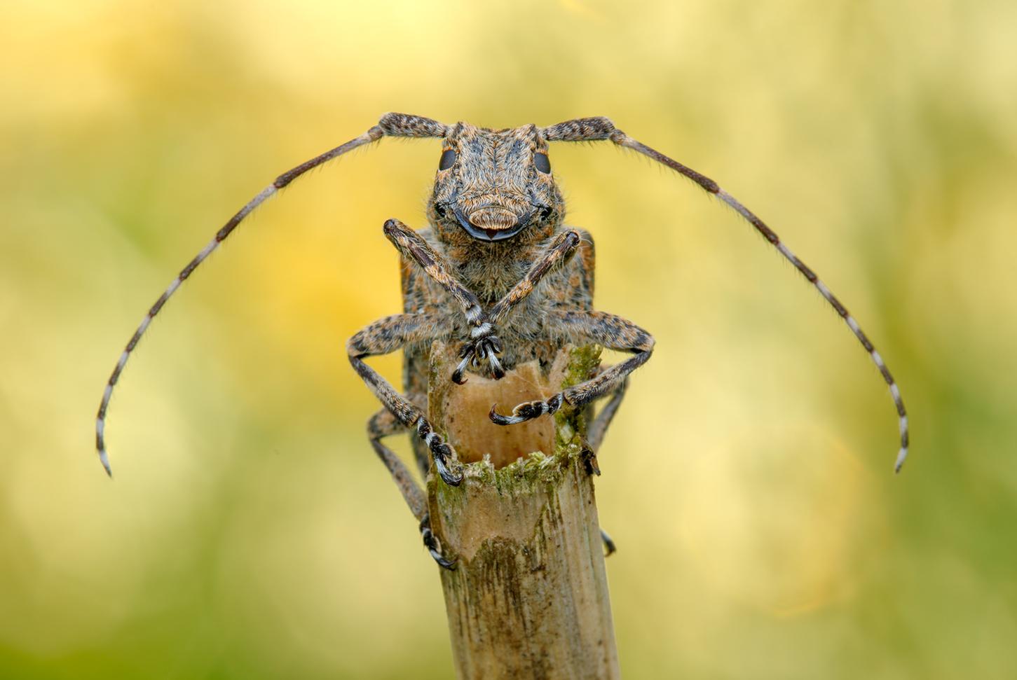 ... bock auf Käfer