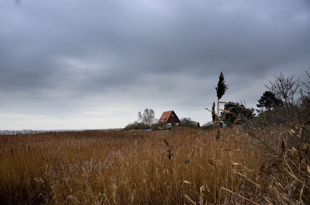 Bodden-seite   von Vitte/Insel Hiddensee