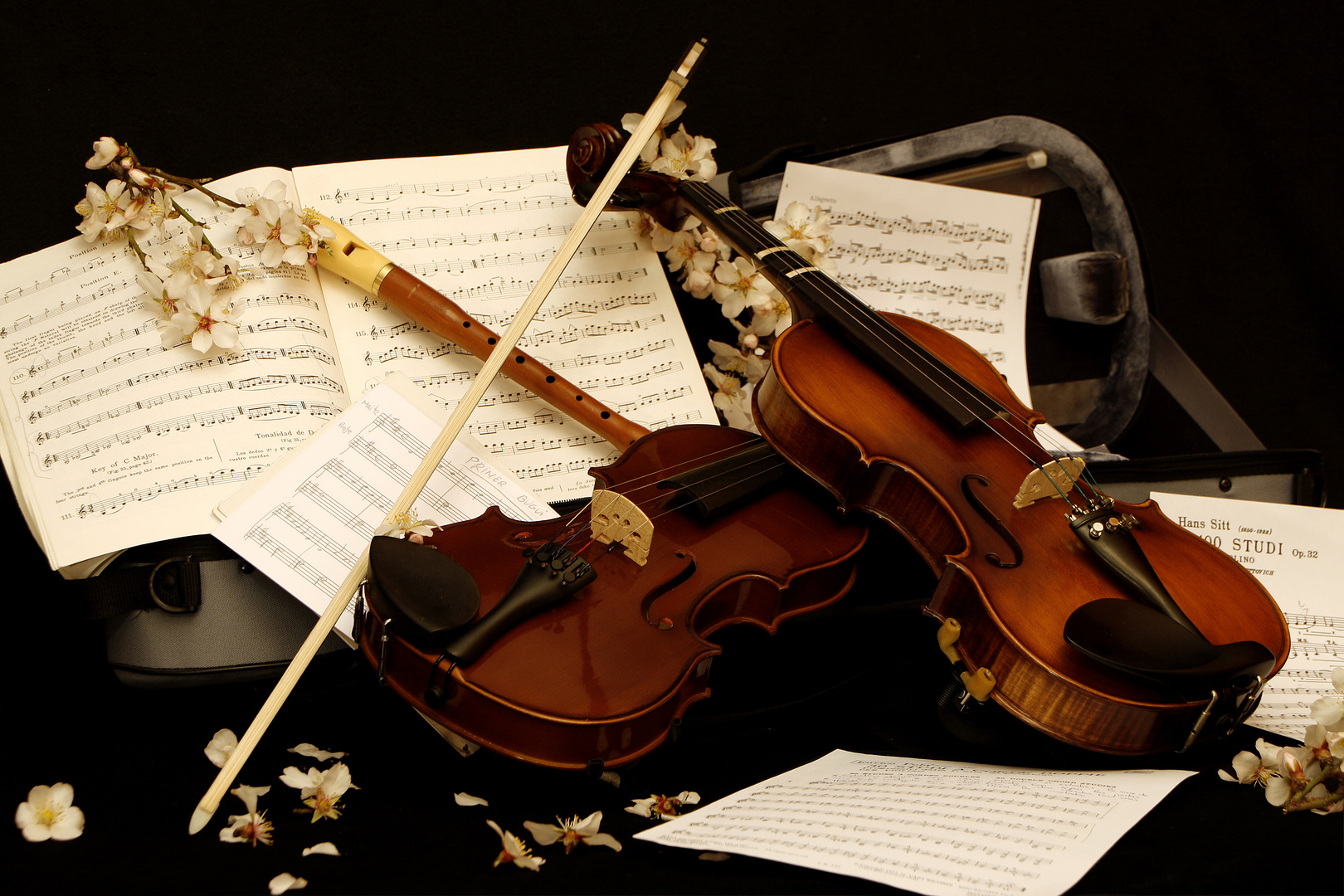 Bodegon musical