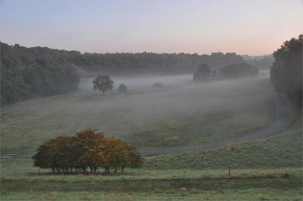 Boden - Nebel