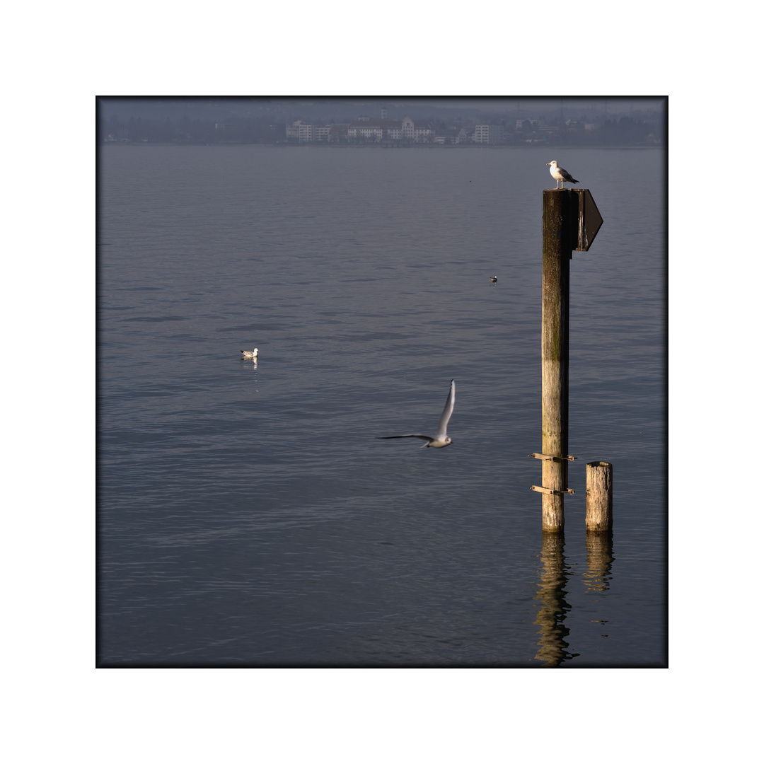 _ bODENsEE _
