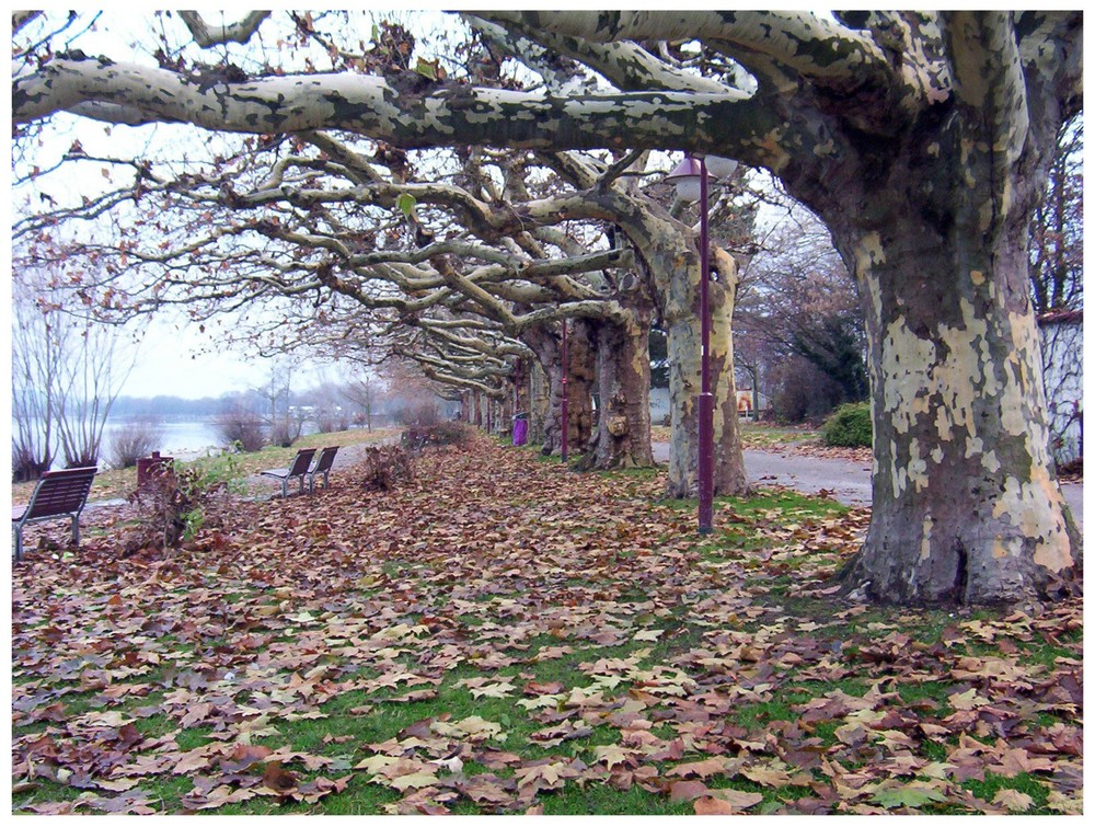 Bodensee im Herbst 3
