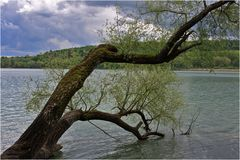 Bodensee-Impression