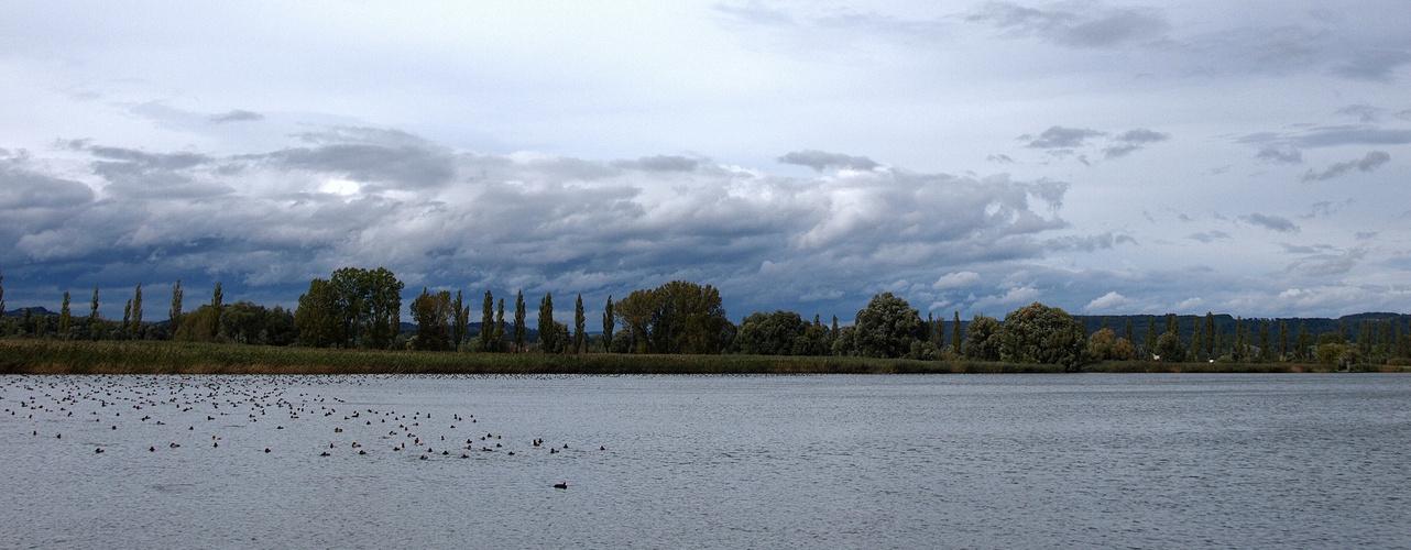 Bodensee mit Enten