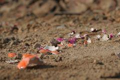 Bodenwelten: Bunte Eierschalen