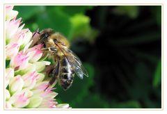 Böse Biene im Garten :)