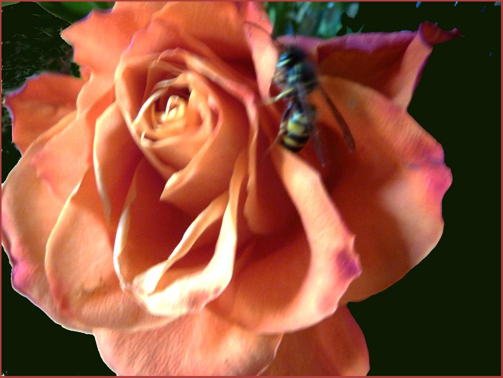 Böse Biene - Wespe habe ich gerade gelernt