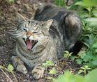 Böse Katze!