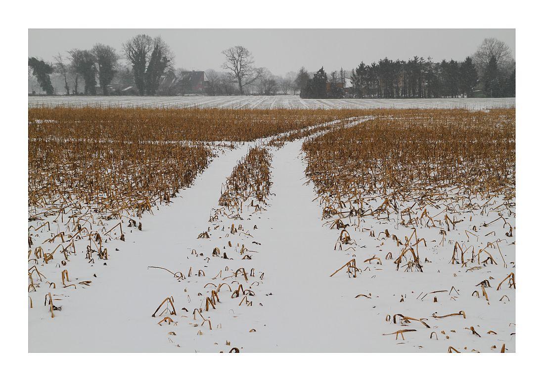 Bösel im Winter 4