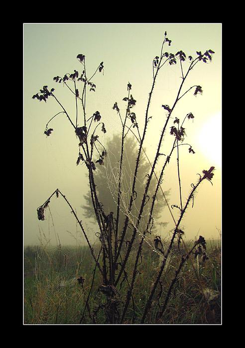 Bohemian Landscape 01