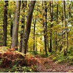 Bois de Rouville 60 en automne