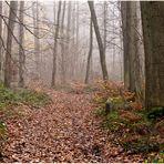 Bois de Rouville en Novembre
