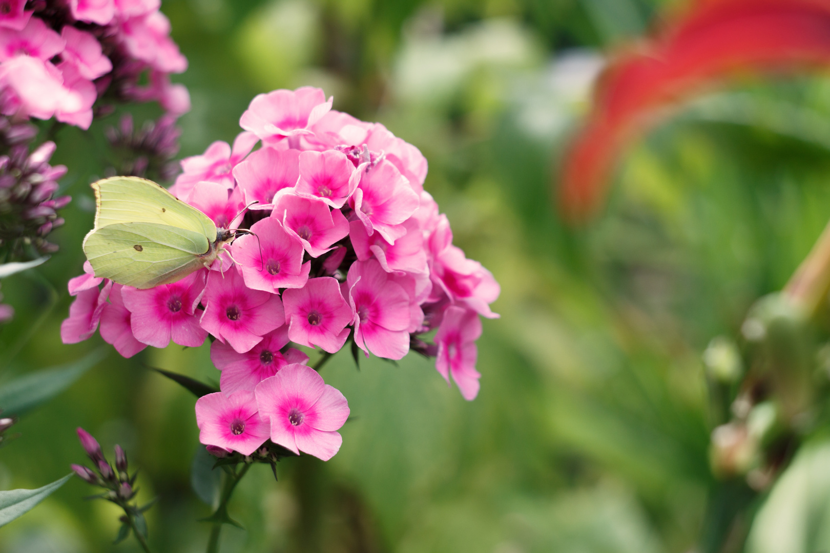 Bokehlicious - Schmetterling