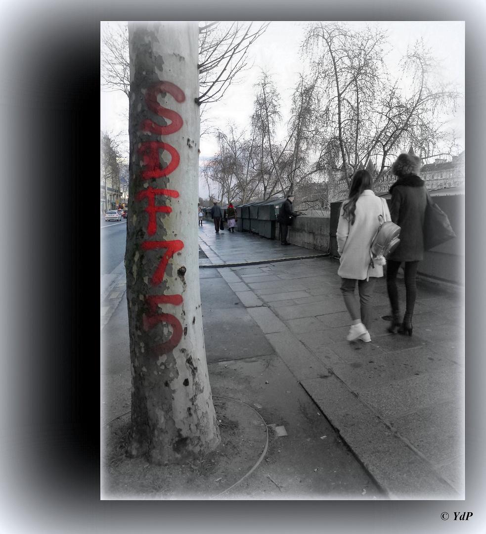 Bombage d'un tag sur le tronc d'un platane...