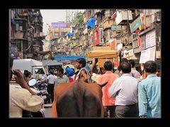 Bombay wie es leibt und lebt