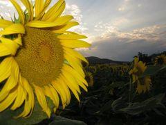 Bon Week end sous le soleil :))