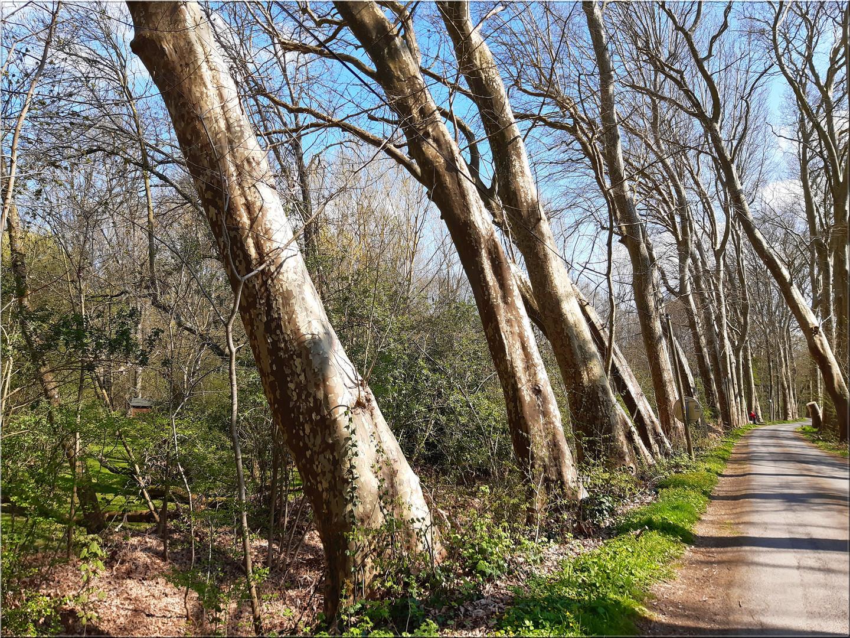 ..Bondaroy, la route aux arbres penchées (45)