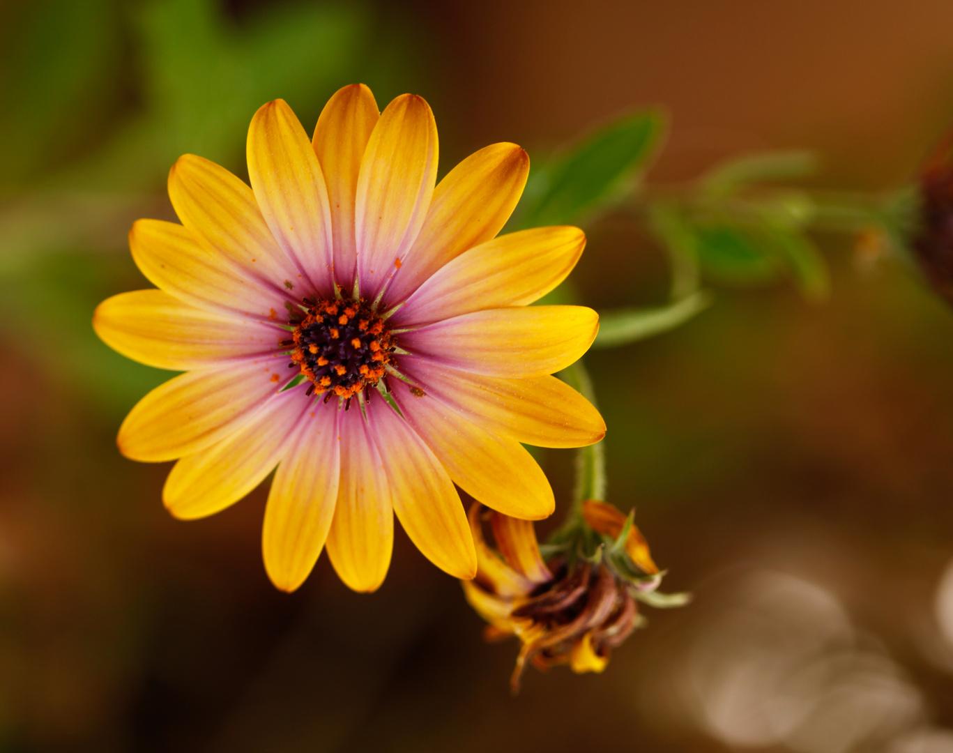 Bonita flor !! Para Merce