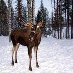 Bonjour de Laponie !!!