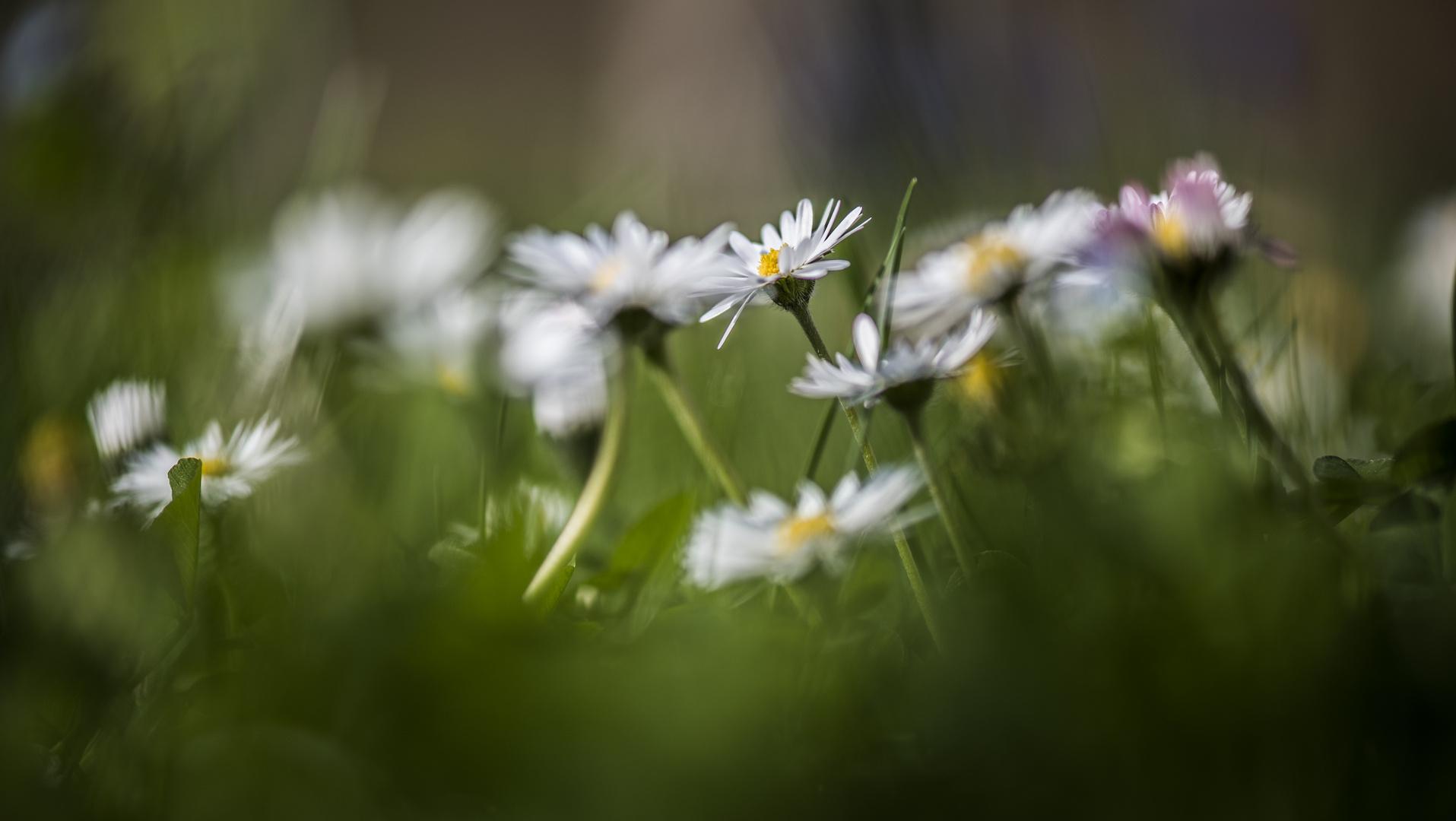 Bonjour le printemps!