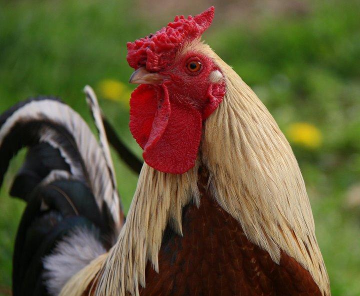 bonjour les poules, suis je assez beau ???
