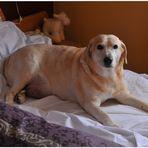 Bonnie 15.04.1999 - 10.03.2012 (das letzte Foto - la última foto)