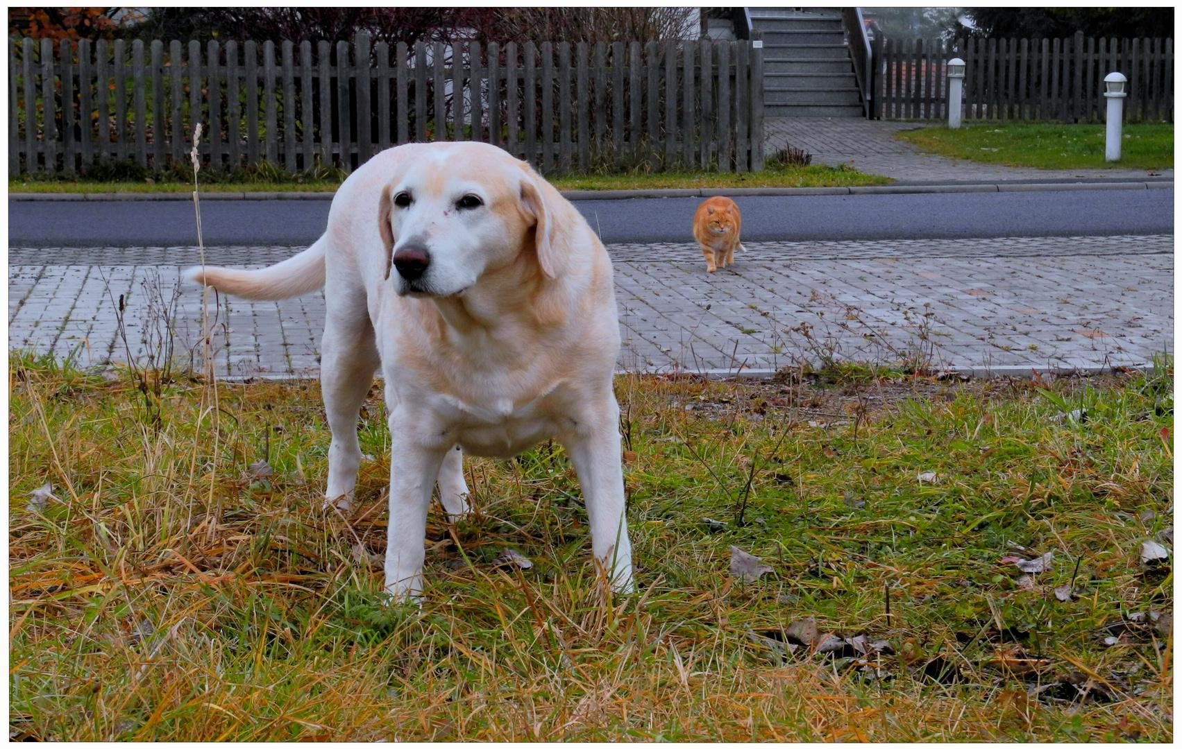 Bonnie und Fuchsie (Bonnie y Zorrito pasean juntos)