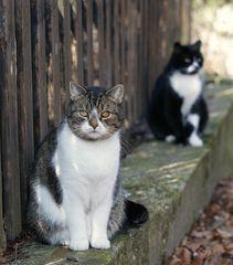 Bonnie und Tobi