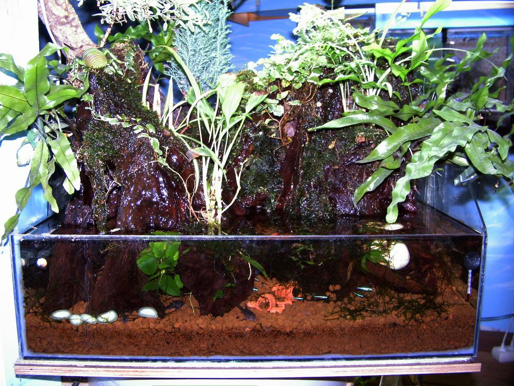 Bonsaj Aquarium ein Jahr in Betrieb