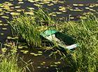 _Boot im Schilf