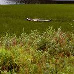 Boote 5 - im norwegischen Schilf