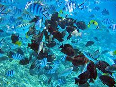 Bora Bora - Aquarium ohne Glas