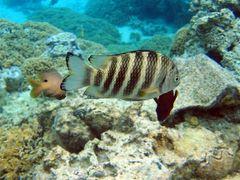 Bora Bora - Fische