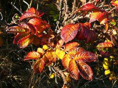 Borkum - Der Herbst ist auch hier bunt