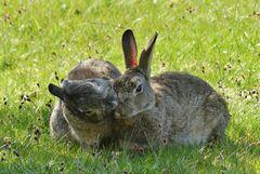 Borkum  -  Ein Küsschen zu Ostern