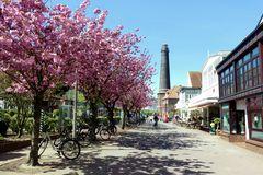 Borkum  - In der Strandstraße blüht wieder die Japanische Kirsche