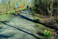 Borkumer Narzissen-Allee an der Waterdelle Richtung Ostland
