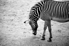 born in black and white