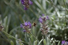 Born to Bee wild