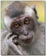 Borneo wildlife #1