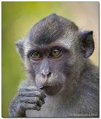 Borneo wildlife #10