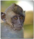 Borneo wildlife #14